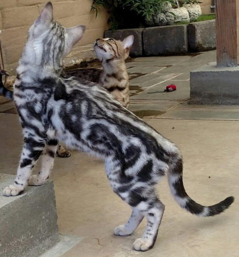 Ferocious Fantasy Felines