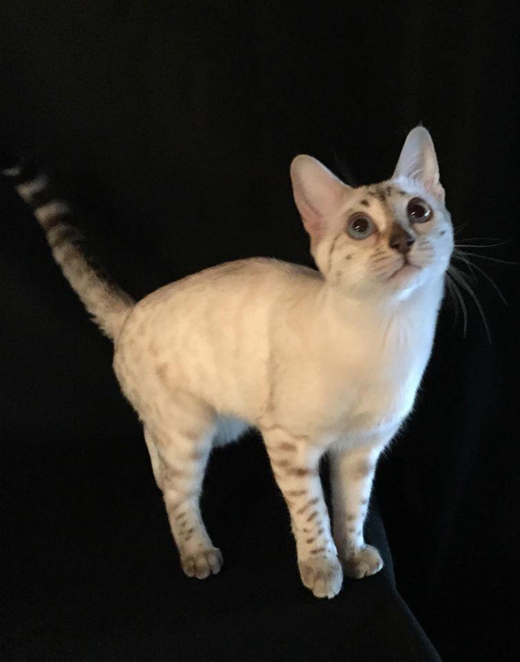 white-cat-2