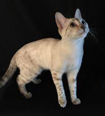 white-cat-3