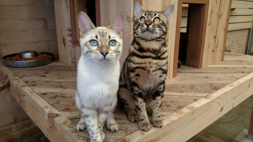 bobsie-twins-1